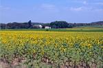 Miles 2 Go, Languedoc